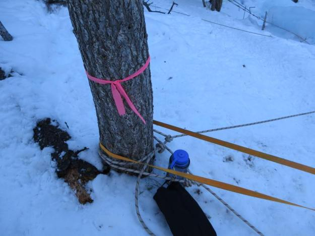Slung Tree
